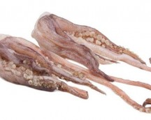 CUTTLEFISH tentacles MOROCCO KG APPROX 3X5
